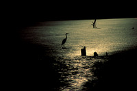 Heron and Moonlight