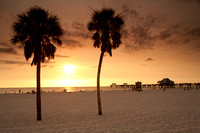 Palm Trees at Clearwater Beach, FL