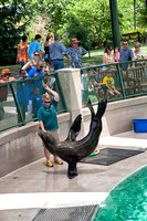 Sea lion performing at the Kansas City Zoo